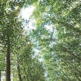 Denuncian deterioro en bosque de Vega Alta