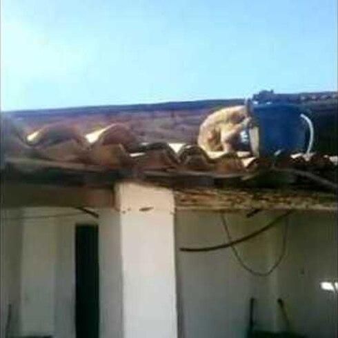 Mono armado causa pánico