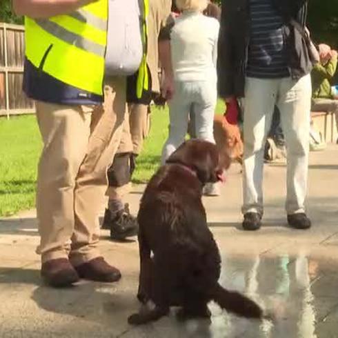 Los perros son los reyes en una piscina en Alemania