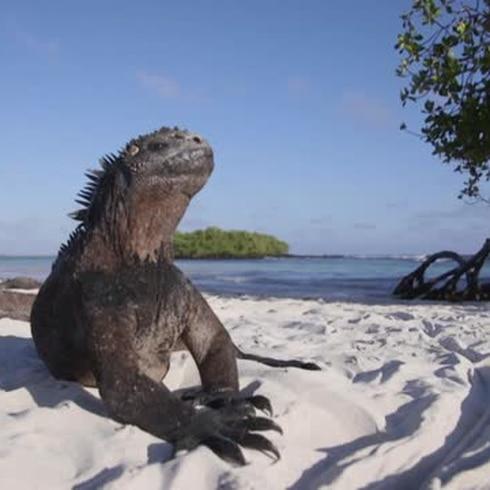 Galápagos: Adaptarse para sobrevivir