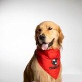 """Se acerca el """"National Dog Day"""""""