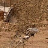 Carey queda atrapado en polémico proyecto de construcción en playa de Rincón