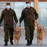 Chile adiestra perros policías para detectar enfermos de COVID-19