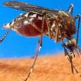 Salud vigilante ante la influenza