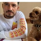 Orlando Bloom se tatúa el nombre de su perro fallecido