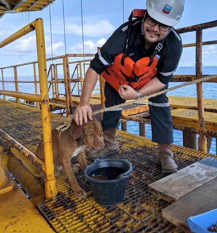 El perro fue avistado el viernes nadando hacia la plataforma de petróleo. (Vitisak Payalaw vía AP)