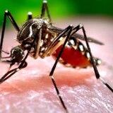 CDC quita aviso sobre el Zika para los viajeros a Puerto Rico