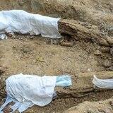Descubren fósiles de una nueva especie en Arizona