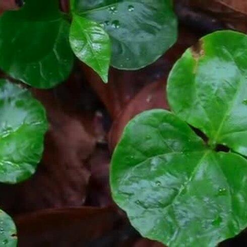 Biólogos transforman su finca de café en una orgánica