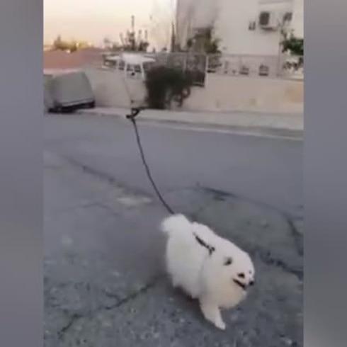 Pasean a perrito con un dron para evitar el coronavirus