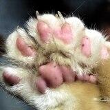 Sacrifican tres gatos con COVID-19 en China