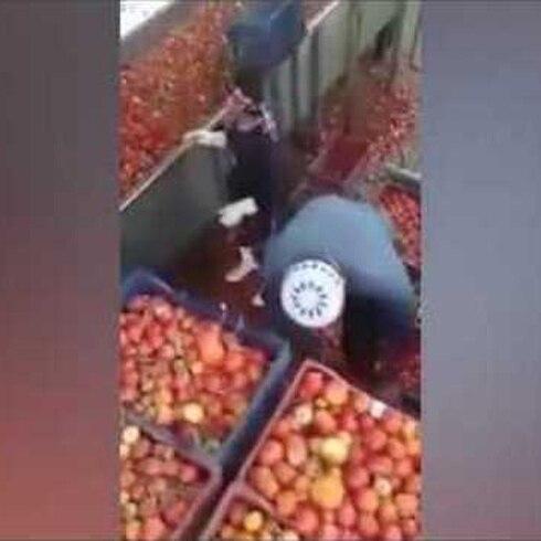 ¡¿Usan tomates podridos para hacer kétchup?!