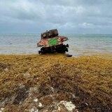 Empresa en Puerto Rico convierte el sargazo en cuero y cosméticos veganos