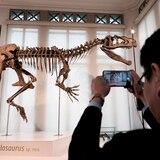 Explican de dónde vino el meteorito que acabó con los dinosaurios