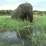 Encuentran 275 elefantes muertos en condiciones misteriosas