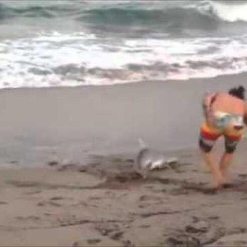 Arrastra a tiburón fuera del agua