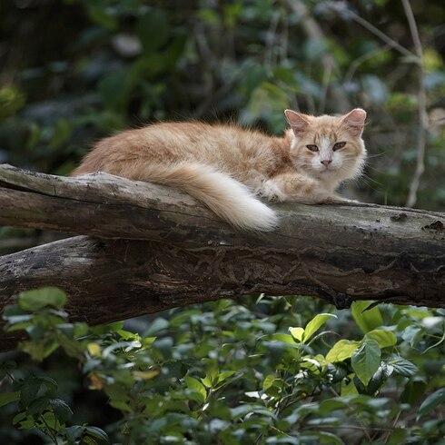 La pandemia ha llevado a hambruna en la Isla de Gatos en Brasil