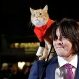 """Muere el gato que inspiró """"A Street Cat Named Bob"""""""