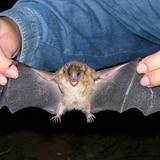 El coronavirus no nació de una sopa de murciélago