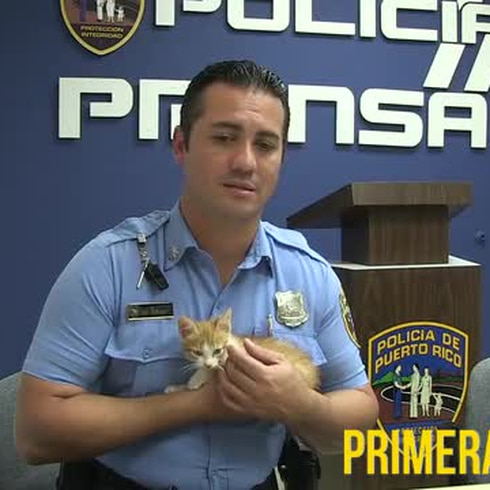 Agente Rodríguez cuidará al gato pateado por otro policía