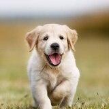 Los perros nacerían preparados para comunicarse con las personas