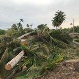 Tribunal ordena paralizar tala de árboles en Cerro Gordo