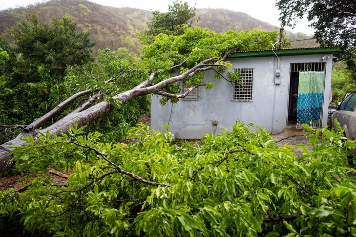 A quenepa tree fell on the roof of a residence in the Las Limas community in Yauco after it was struck by a lightning strike caused by tropical storm Isaías.