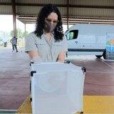 Comienza la liberación de mosquitos machos con Wolbachia en Ponce