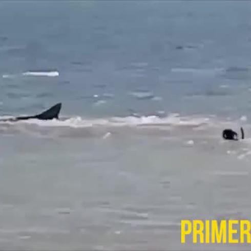 Perro arriesga su vida jugando con tiburones