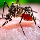 Confirman cuatro casos locales y 50 foráneos de zika en Florida