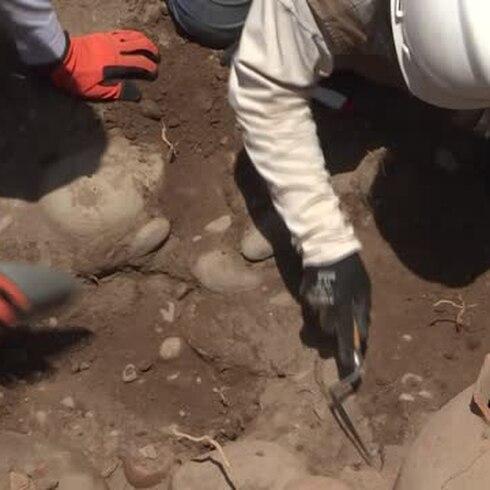 Descubren un tesoro mientras instalaban tubería