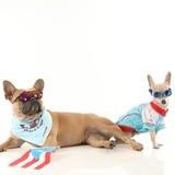 Toy Doggie presenta colección de verano para mascotas