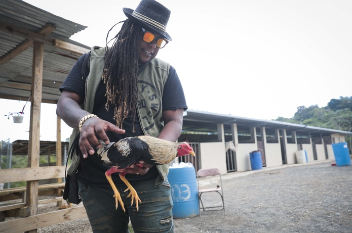 Su otra pasión. El integrante del dúo reguetonero Zion y Lennox  tiene cerca de 50 gallos de pelea. (wandaliz.vega@gfrmedia.com)