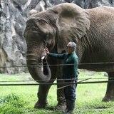 DRNA alega que animales del zoológico de Mayagüez están en buen estado