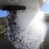 """""""Bombardean"""" peces desde un avión para repoblar un lago de Utah"""