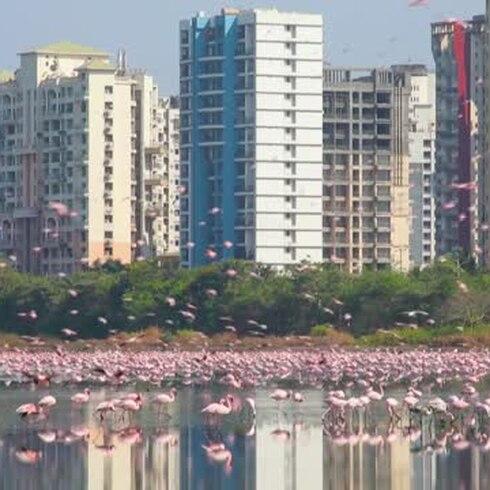 ¡Sorpresa! Miles de flamencos emocionan en la pandemia