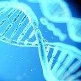 OMS emite sus primeras recomendaciones para manipular el genoma humano