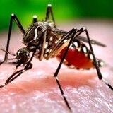 María fumiga los mosquitos del dengue, zika y chikungunya