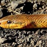 Las serpientes tuvieron patas en sus primeros 70 millones de años