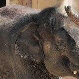 Zoológico de Indianápolis abrirá centro para salvar especies