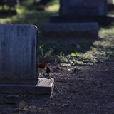 Profanan cuatro tumbas en el cementerio de Río Grande