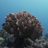 La mitad de los corales de la Gran Barrera desapareció en los últimos 25 años