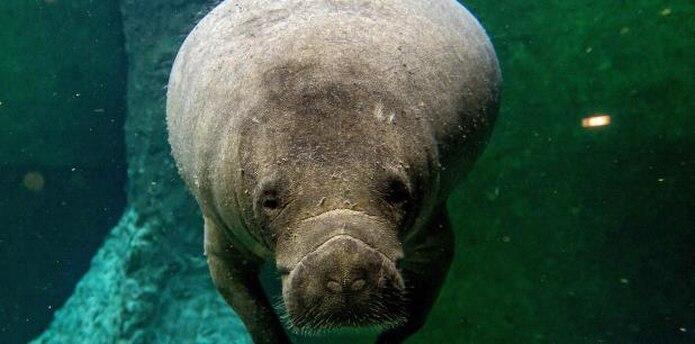 En lo que va de año un 27% de los animales han muerto por embarcaciones. (EFE)