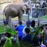 Medida exige al DRNA abrir el zoológico de Mayagüez en diciembre