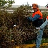 DRNA anuncia reciclaje de árboles de Navidad en Hato Rey y Guaynabo