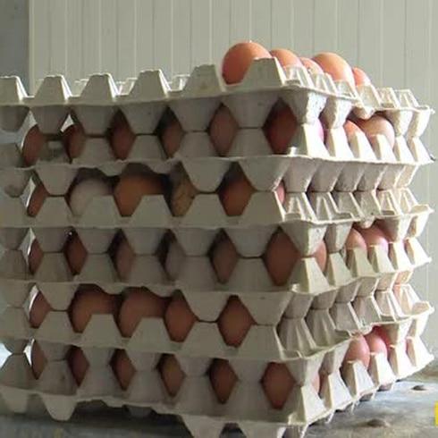 Otra crisis de huevos contaminados