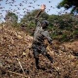 El clima da esperanzas a África ante la plaga de langostas