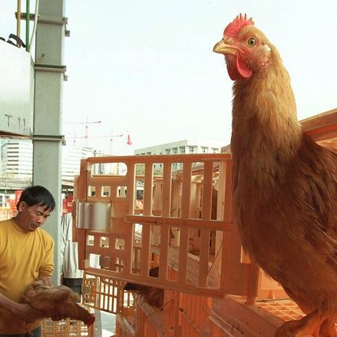 China confirma primer contagio humano de la cepa H10N3 de la gripe aviar