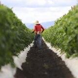 Anuncian becas enfocadas en la agricultura y el medioambiente