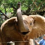 Pide postura a la gobernadora  sobre zoológico
